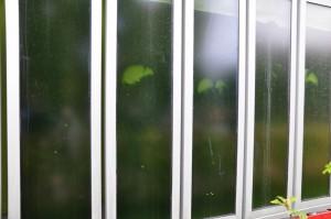 In den Glasscheiben an der Fassade wachsen stetig Algen.